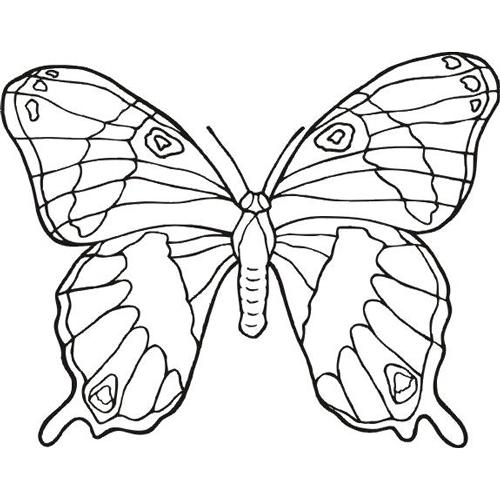 DIY | schnelle Karte mit Schmetterling basteln