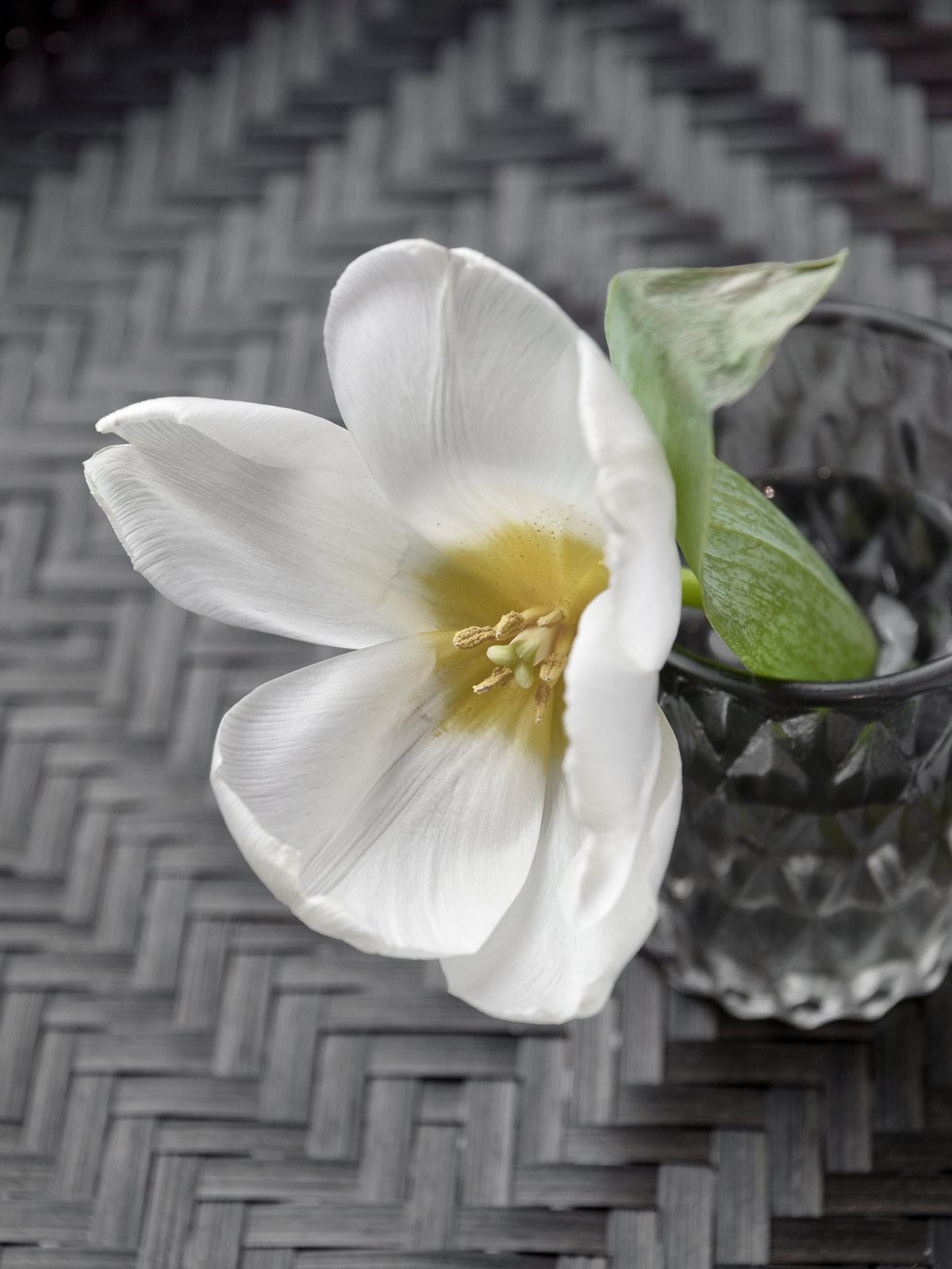 Kolumne | von Blumen und Blüten und warum es keine zum Valentinstag geben wird