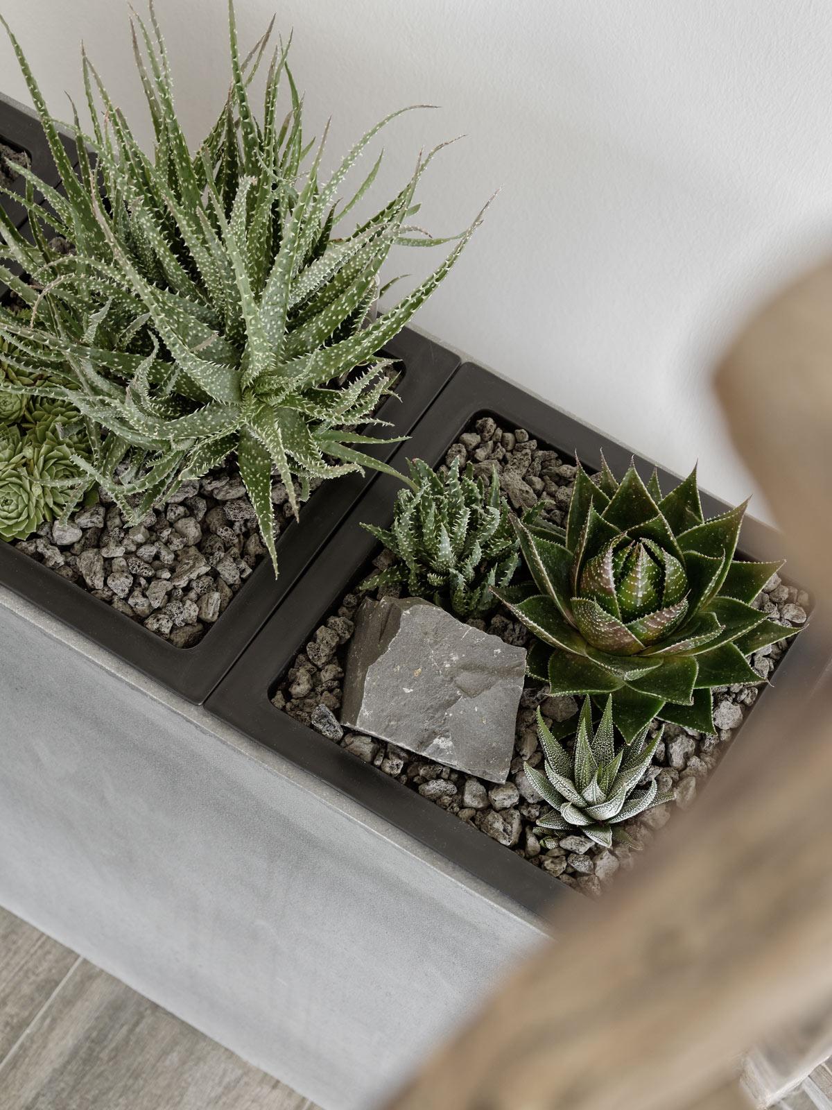 steingarten-mit-sukkulenten-im-wohnzimmer