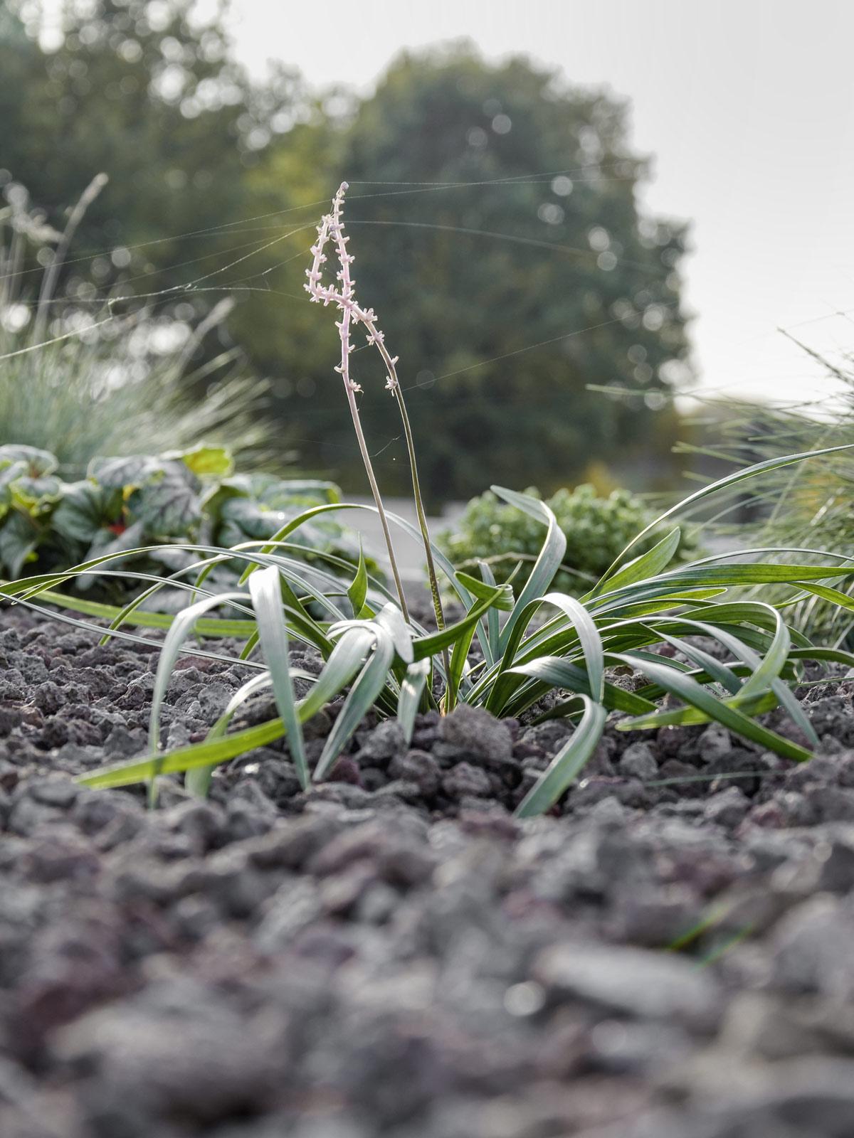 gartenbepflanzung-im-herbst