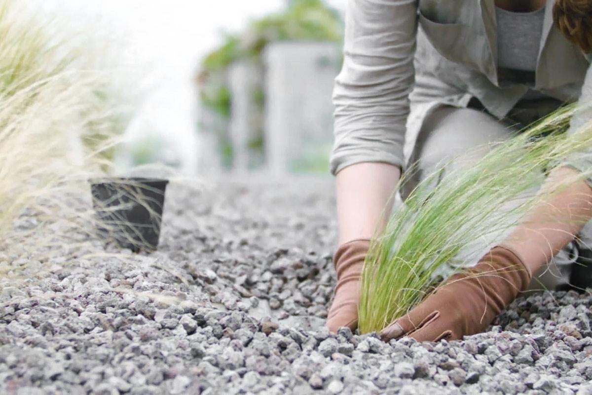 fantastisch gartenabgrenzung mit pflanzen bilder die